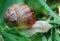 Stock Image : Snail