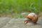 Stock Image : Snail on road