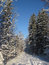 Stock Image : Snowy winter forest and knurled wide trails. Christmas morning.