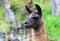 Stock Image : South American Llama