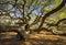 Stock Image : South Carolina Lowcountry Angel Oak Tree Charleston SC Nature Scenic