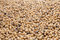 Stock Image : Soybeans seeds
