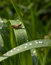 Stock Image : Sparkle rain drops on grass and grasshopper