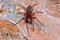 Stock Image : Spider on  surface of stone web.