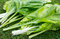 Stock Image : Spinach Leaves