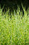Stock Image : Spotted fresh green grass background