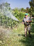 Stock Image : Spraying pesticide in vineyard
