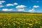 Stock Image : Spring