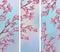 Stock Image : Spring Cherry Sakura Banners