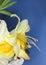 Stock Image : Spring flower macro
