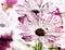 Stock Image : Spring flowers