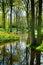 Stock Image : Spring garden landscape