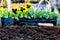 Stock Image : Spring Gardening
