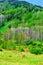 Stock Image : Spring landscape