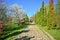 Stock Image : Park alley in spring season