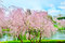 Stock Image : Spring tree