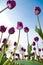 Stock Image : Spring tulip flowers
