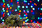 Stock Image : Spruce on Christmas lights background
