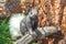 Stock Image : Squirrel - Kaibab