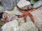 Stock Image : Starfish undersea