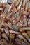 Stock Image : Stewed ducks head