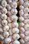Stock Image : Strands of garlic bulbs