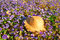 Stock Image : Straw hat on a field of purple pansies with a butterfly