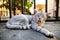 Stock Image : Stray cat
