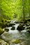 Stock Image : Stream in the forest