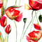 Stock Image : Stylized Tulips and Poppy flowers illustration