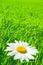 Stock Image : Summer Background