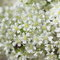Stock Image : Summer flowers background