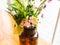 Stock Image : Summer flowers