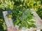 Stock Image : Summer herbs