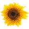 Stock Image : Sunflower  on white