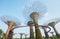 Stock Image : Supertree Grove