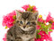 Stock Image : Tabby kitten and flowers