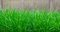 Stock Image : Tall Grass