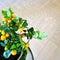 Stock Image : Tangerine tree in a pot