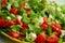 Stock Image : Tasty Greek Salad with feta