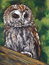 Stock Image : Tawny Owl, Oil Pastel Painting