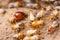 Stock Image : Termite