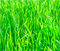 Stock Image : Texture of fresh grass