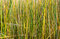 Stock Image : Texture of yellow green grass