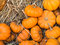 Stock Image : Thanksgiving pumpkins background