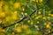 Stock Image : Thorny Acacia karoo