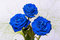 Stock Image : Three beautiful blue roses with green leaves