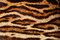 Stock Image : Tiger fur
