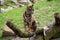 Stock Image : Tiger sitting on tree branch