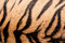 Stock Image : Tiger skin closeup abstract